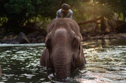 Tad Lo Elephant